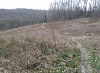 Crazy Hill Trail